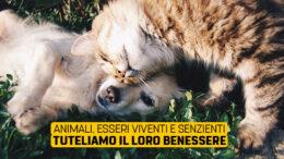 Tutela degli animali: esseri senzienti